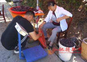 Grapes from Yingzhong Village, Liuchang Town, Xifeng County, Guiyang City are waiting for you to taste(中英文版)插图(2)