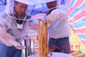 贵州团圆蜂生态农业有限公司2021黄荆花蜂蜜已经收获,欢迎客户定购插图(3)